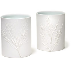 Forestcups