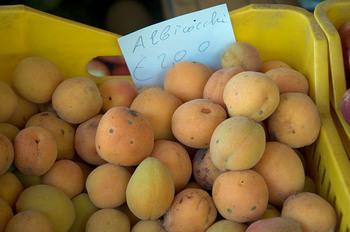 Apricots_1