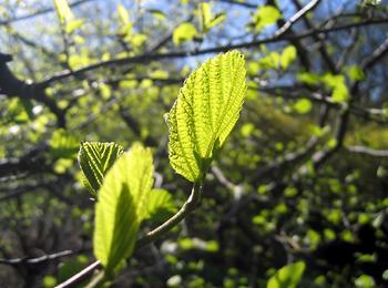 images/leaf
