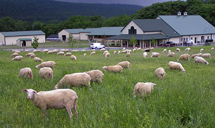 Valleyshepherdcreamery2